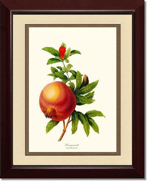 Fruit Print: Pomegranate