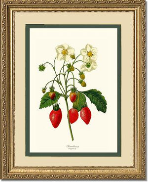Fruit Print: Strawberry