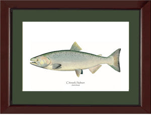 Chinook Salmon -  Adult Female
