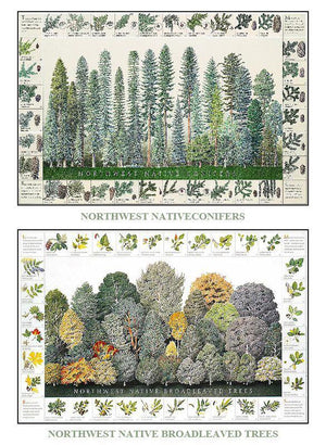 Tree Poster Mini Combo: Northwest Native Conifers and Broadleaved Tree Identification Charts
