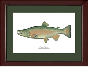 Coho Salmon - Breeding Male