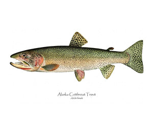 Antique Fish Print: Alaska Cutthroat