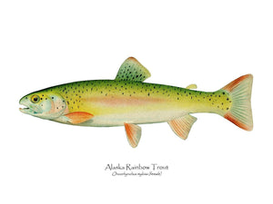 Antique Fish Print: Alaskan Rainbow Trout