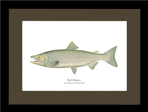 Red Salmon  - Male
