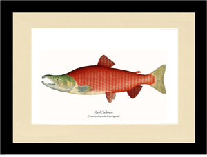 Red Salmon - Breeding Male