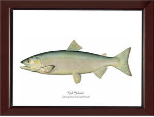 Red Salmon -Female