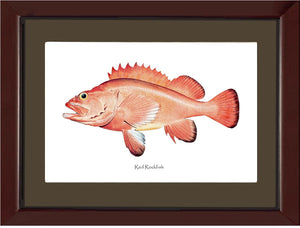 Red Rockfish