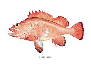 Antique Fish Print: Red Rockfish
