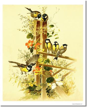 Victorian Print: Great Tits Parus major