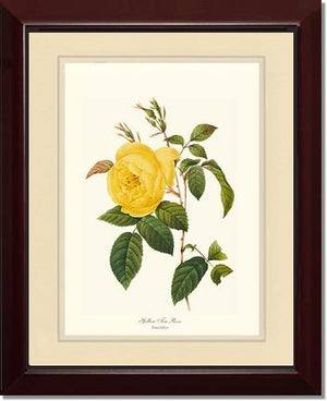 Rose Print: Tea Rose, Yellow