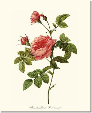 Rose Print: Thornless Rose