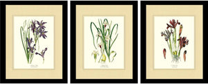 Flower Floral Print Set | Vintage Lilies and Iris Framed Botanical Art