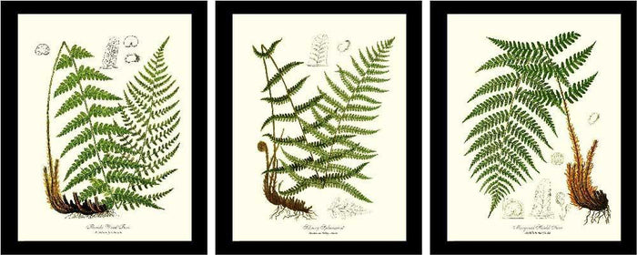 Vintage Fern  Prints Set