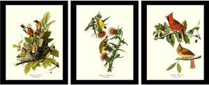 Audubon Bird Prints | Common Bird Set