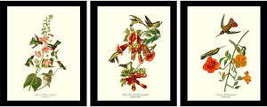 Audubon Bird Art Prints | Framed Vintage Set