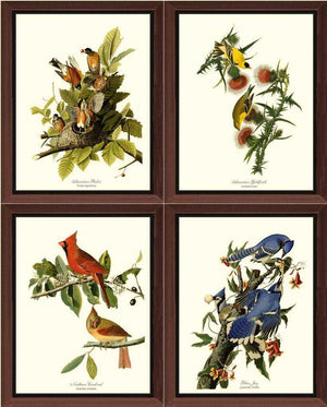 Audubon Matching Set of 4 Bird Prints