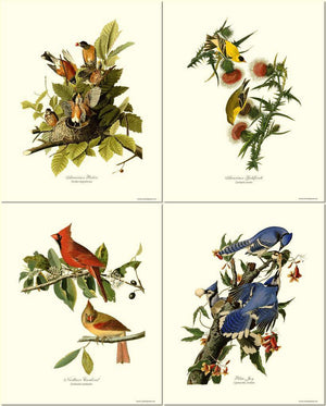 Bird Prints Art by James Audubon. Matched Set of 4