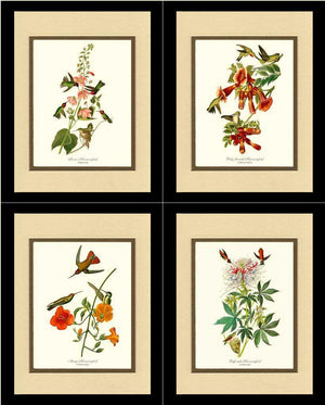 Hummingbirds Art Prints. Matching Set of 4.