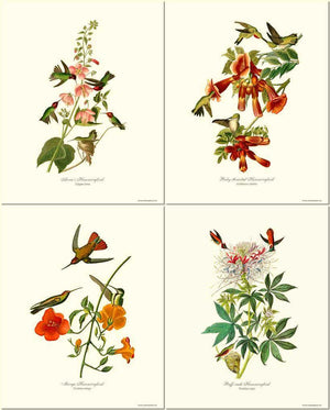 Hummingbirds Art Prints Set by Audubon