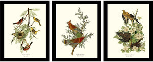 Audubon Brown Bird Art Prints | Framed Vintage Set
