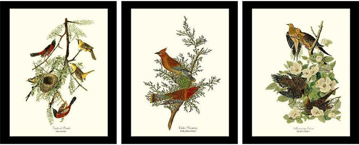 Audubon Bird Prints |  3 Vintage Brown  Prints