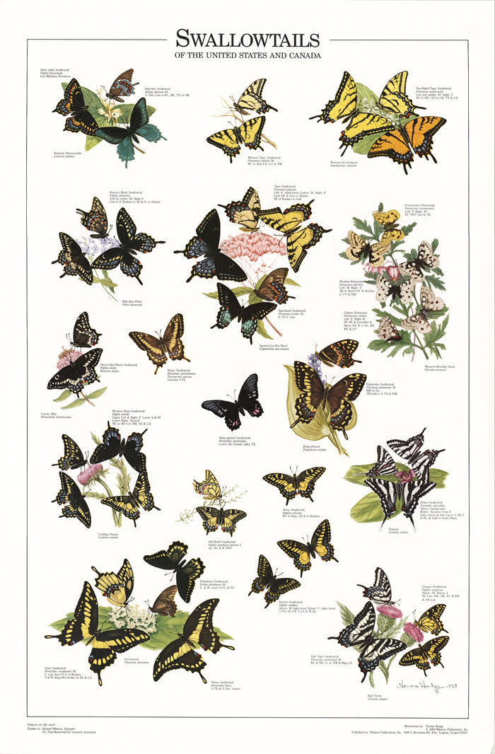 Swallowtails of the U.S. and Canada