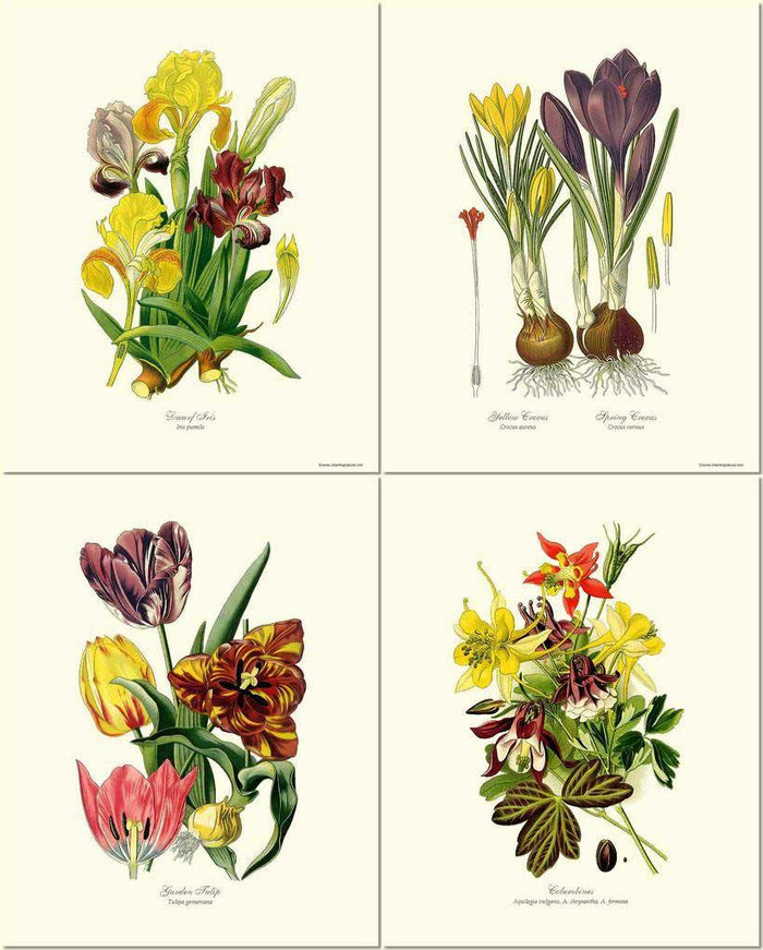 Spring Flower Print Set | Vintage Print Wall Art Decor