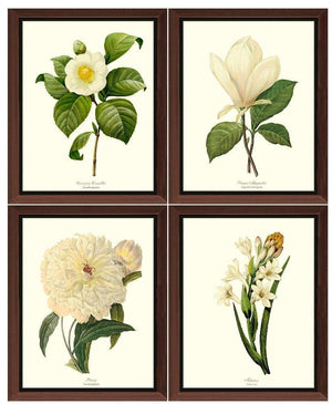 White Flower Botanical Prints Set