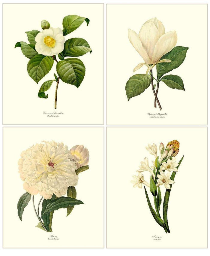 .White Botanical Flower Prints Set