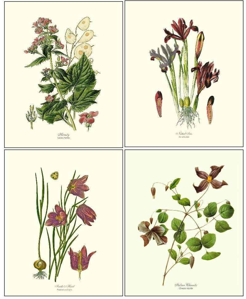 Violet Flower Botanical Print Set | Vintage Wall Art Decor