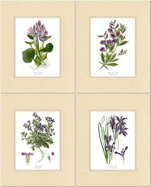 Lavender Flower Botanical Print Set