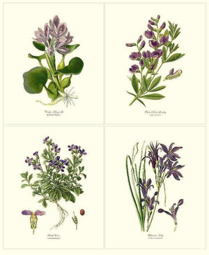 .Lavender Flower Botanical Print Set