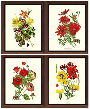 Vintage Red Garden Flower Botanical Print Set