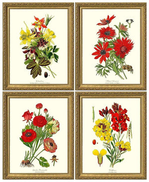 Red Garden Flower Botanical Set | Vintage Wall Art Decor