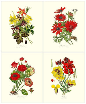 .Red Garden Flower Botanical Set | Vintage Wall Art Decor
