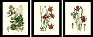 Vintage Botanical Flower Floral Prints in  Black Frames