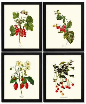 Vintage Red Berry Fruit Botanical Print Set