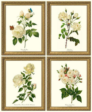 Vintage White Rose Botanical Print Set