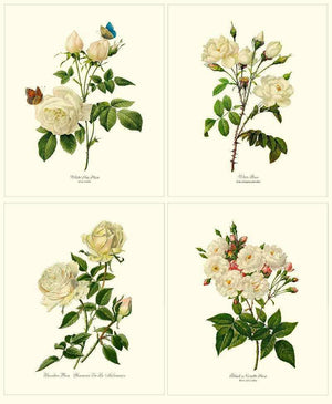 White Rose Botanical Prints. Matched Set of 4