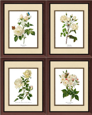 White Rose Vintage Botanical Print Set. Matched Set of 4