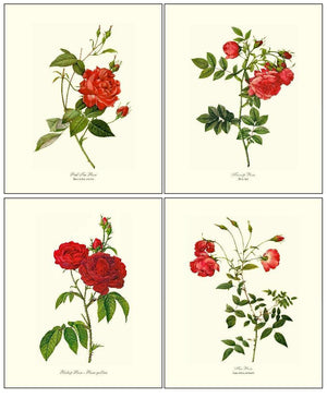 Red Rose Vintage Art Prints Set of 4