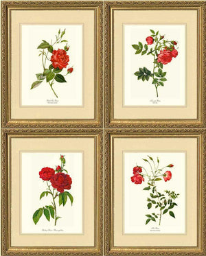 Red Rose Prints. Matched Set of 4