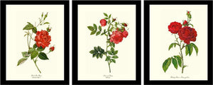 Red Rose Wall Art Print Set. Vintage Framed Botanical Decor