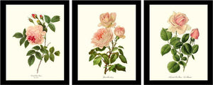 Vintage Pink Rose Framed Botanical Print Set