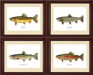 Vintage Trout Fish Prints Set