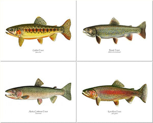 Vintage Trout Fish Prints: Golden Trout, Brook Trout, Cutthroat and Rainbow Trout.
