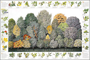 Northwest Native Broadleaved Tree Species Poster Identification Chart