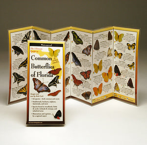 COMMON BUTTERFLIES OF FLORIDA - FOLDING GUIDE