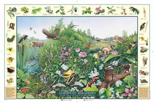 Northwest Hedgerows Poster