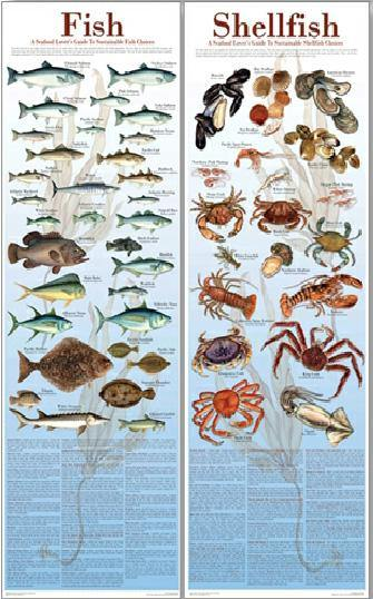 "Seafood Posters and Guides 12""x36"""
